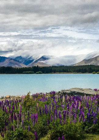 Lupins and Cyrstal Lake