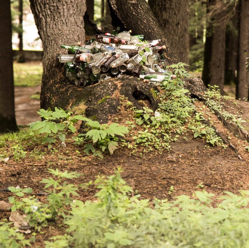 Nature rocks!