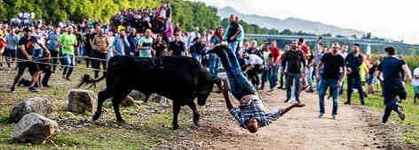 Vaca do cordas.jpg
