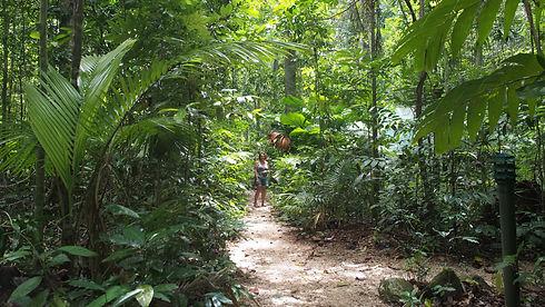 JunglePaths.JPG
