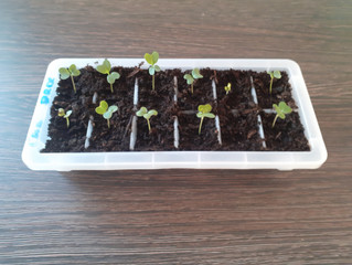 It started with a seed...