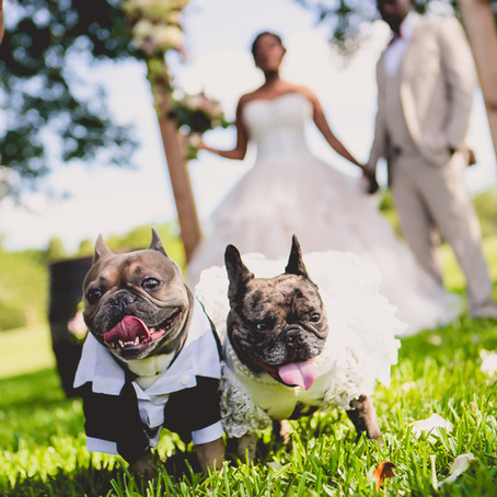 5 Ways to incorporate your fur baby in your wedding