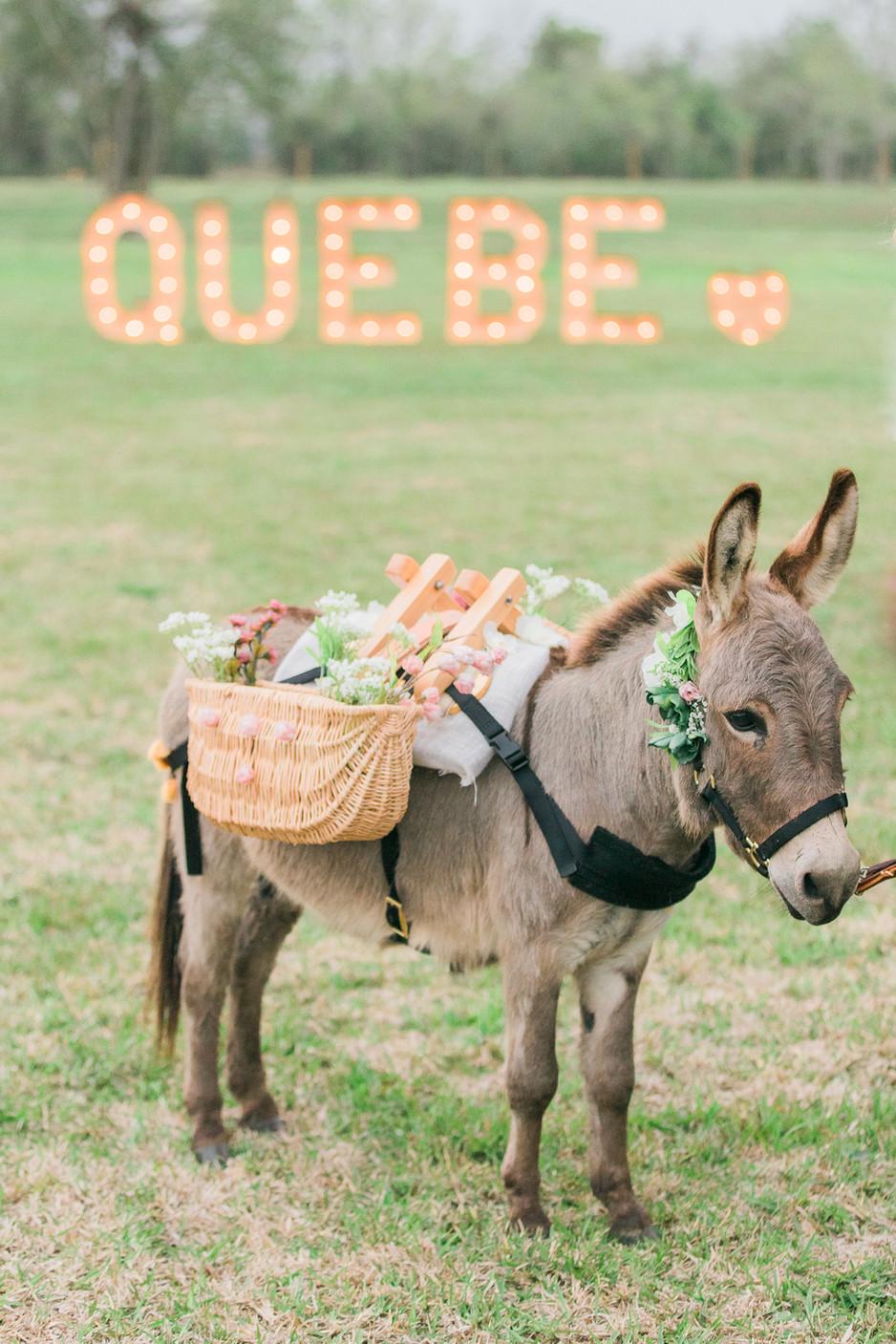 Willie the Shot Donkey