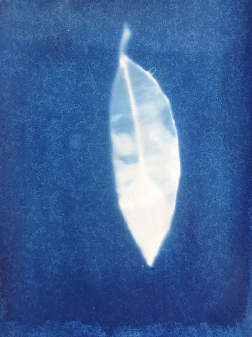 Crane Feather Blue