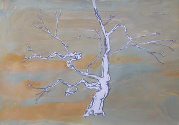Lisbon Tree