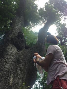 Paloma rising in Prospect Park