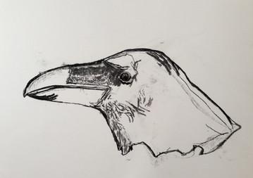 Raven Charcoal