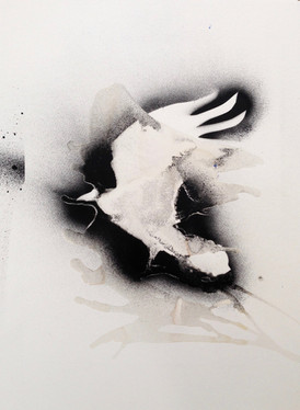 White Raven Flight