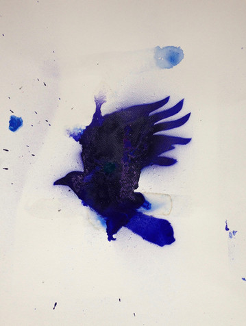 Blue Raven Flying