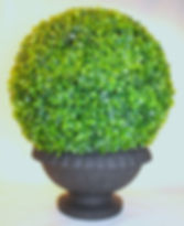 Boxwood Garden Sphere in Urn