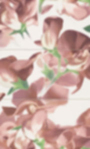 Bloom Carmine