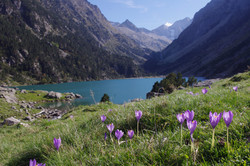 Mountain Lake - Lac Gaube