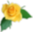 single yellow rose_edited.png