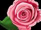 sinle pink rose birdseye.png