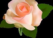 single peach rose.png