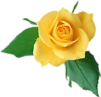 single yellow rose.png