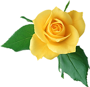single yellow rose.png