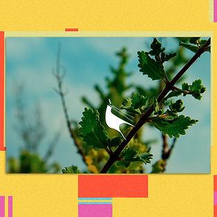 Citruss Lima Obra.jpg