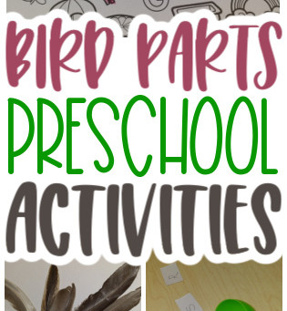 Learning About Birds with Preschoolers