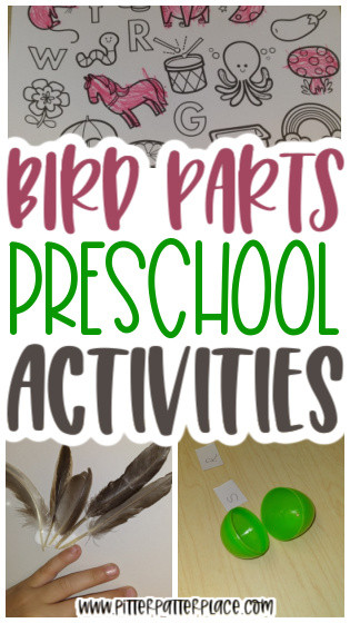 collage of bird activity images with text: Bird Parts Preschool Activities