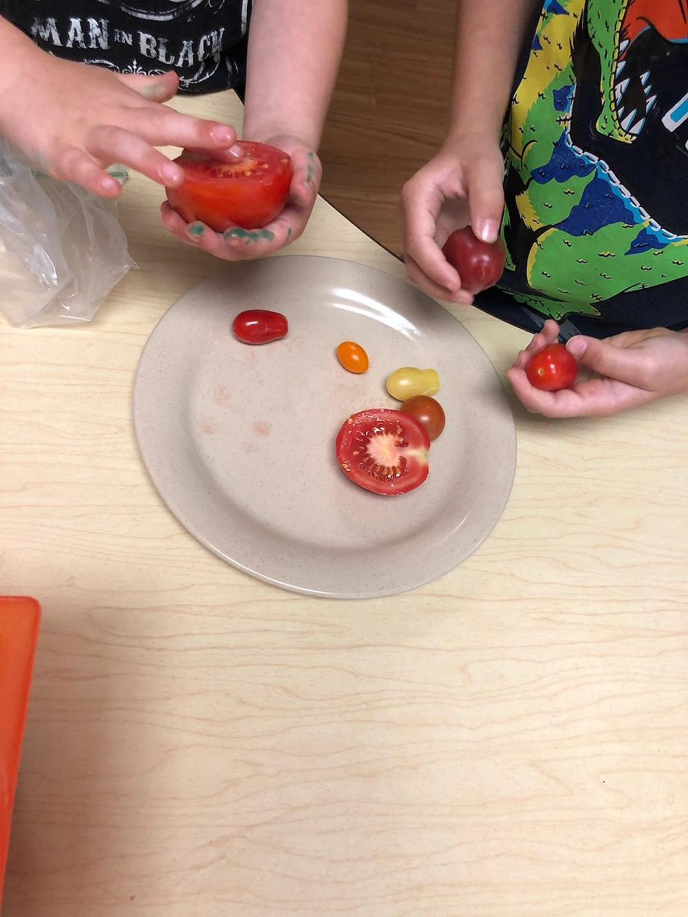 preschoolers examining different types of tomatoes