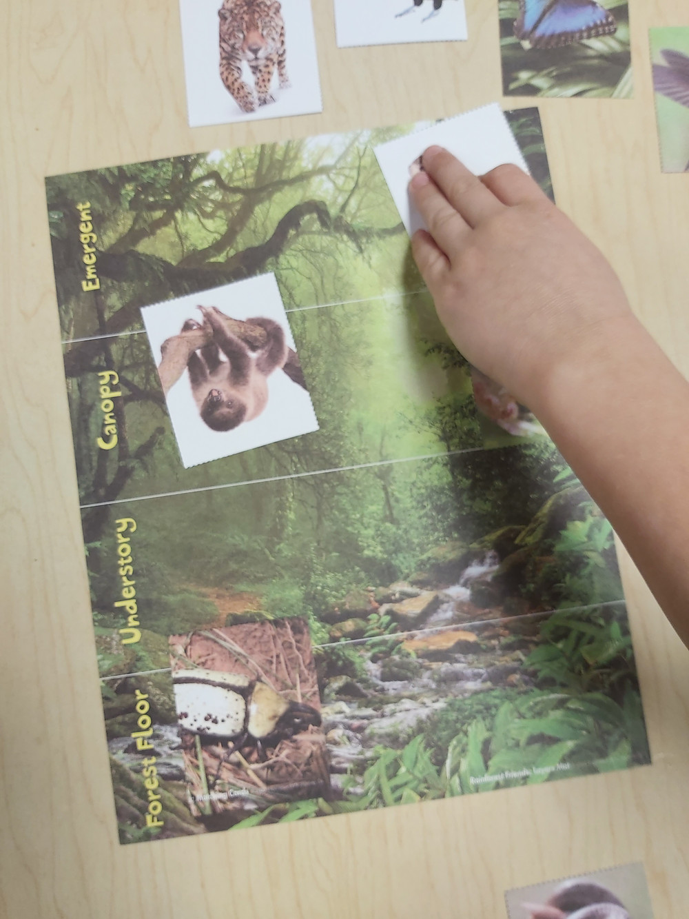 preschooler placing animal card on rainforest layers matching card game