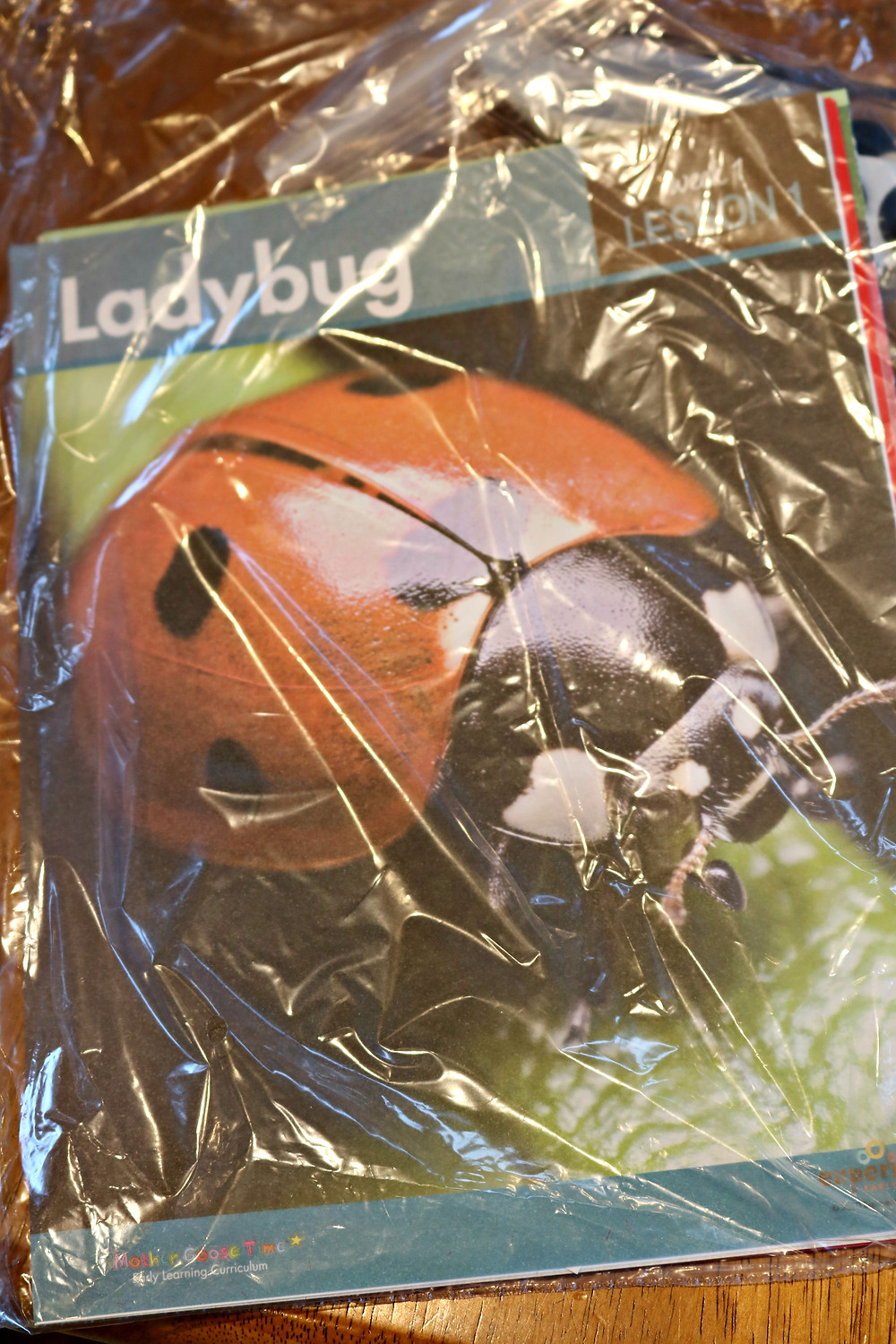 Ladybug Daily Discovery Bag filled with Lesson 1 supplies