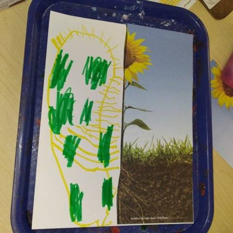 child's root drawing created with marker on tray