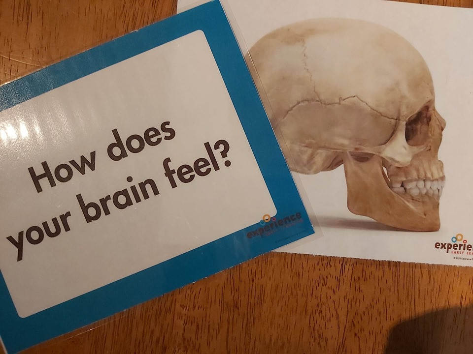 How does your brain feel question poster and image of bones in the skull