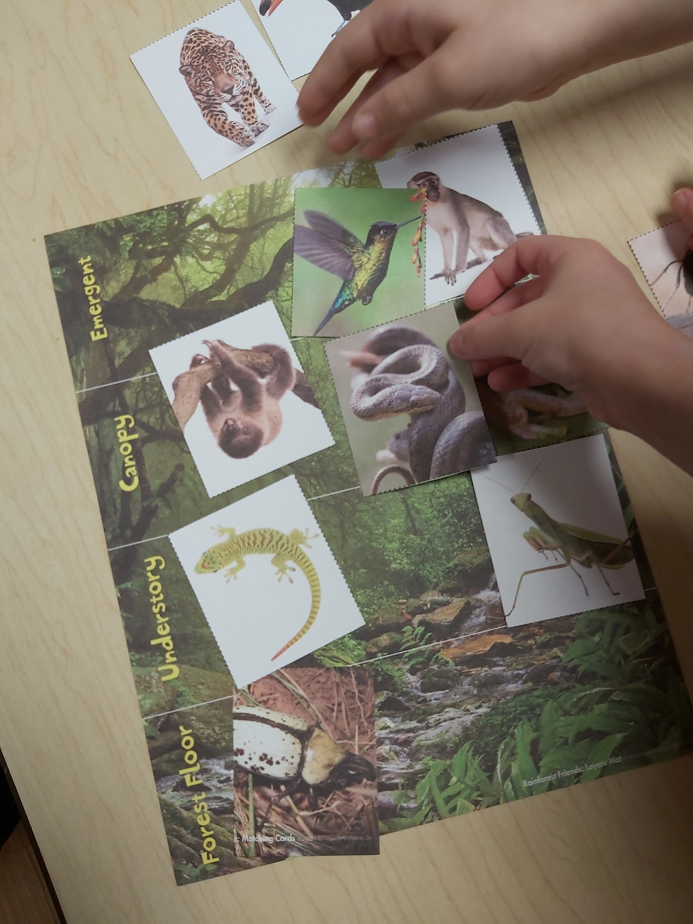two preschoolers working together on rainforest layers matching game
