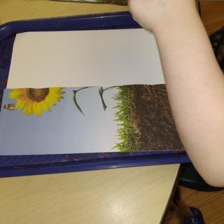 child with half of sunflower images laying over paper on tray