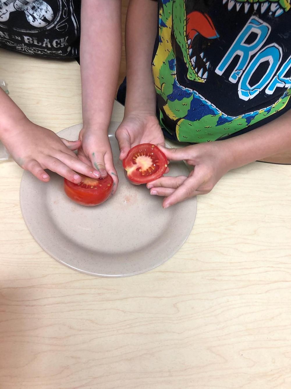 preschoolers examining tomatoes