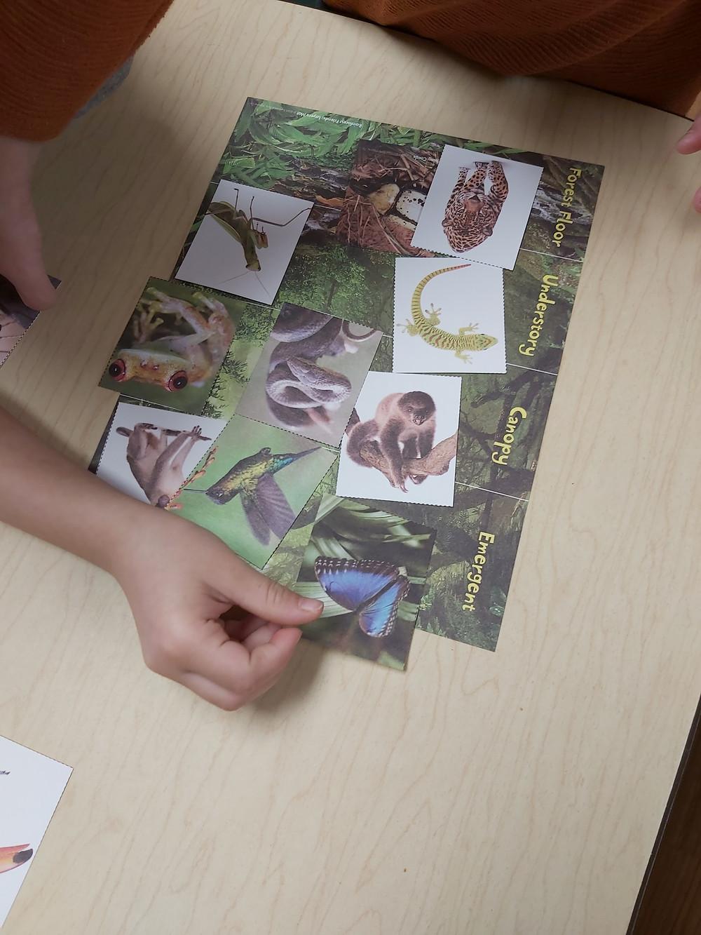preschooler placing butterfly card on rainforest layers gameboard