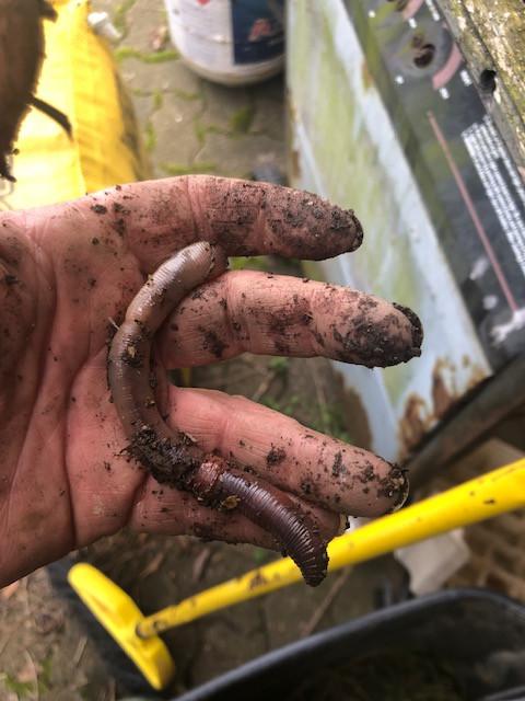 hand holding an earthworm