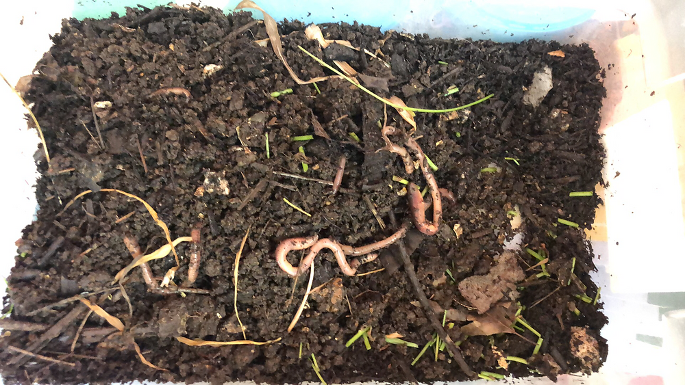 bin filled with dirt and rubber worms