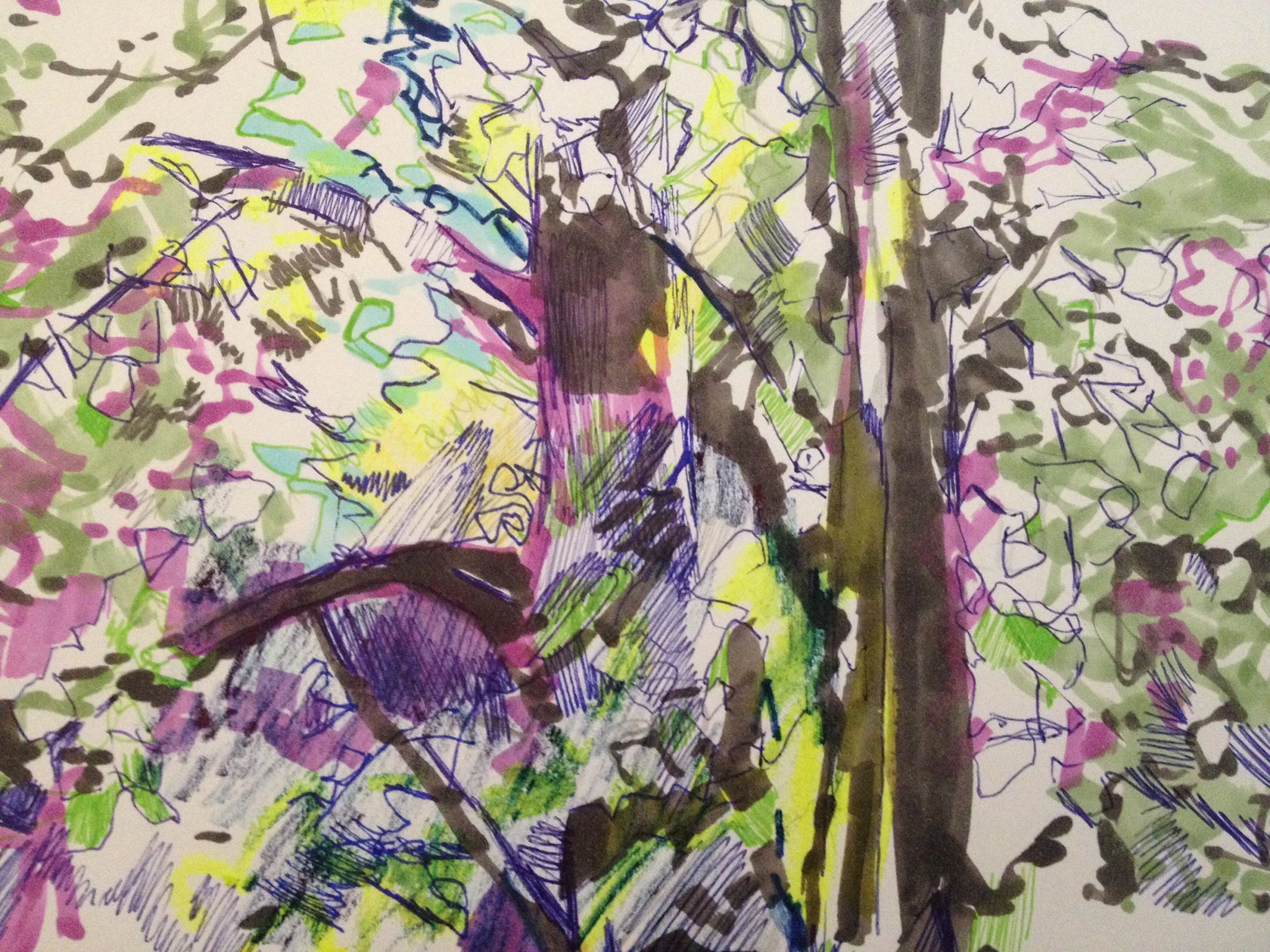 Trees drawing in the light Oct 2015