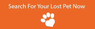 Search for your Lost Pet Now - Finding R