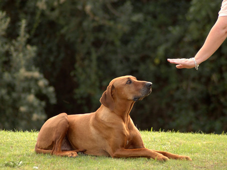 Important Commands To Teach Your Dog