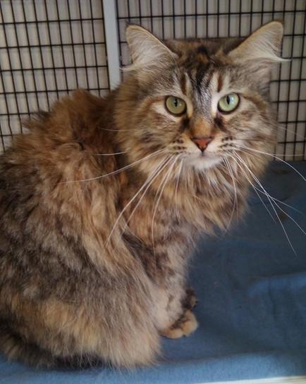 Cat_Longhair sitting in cat condo_2019_w