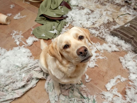 Dealing With Destructive Chewing