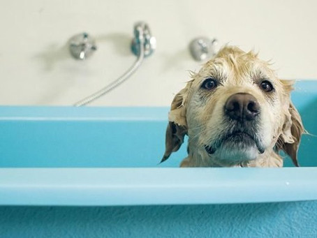 Bath Time Tips for Dogs