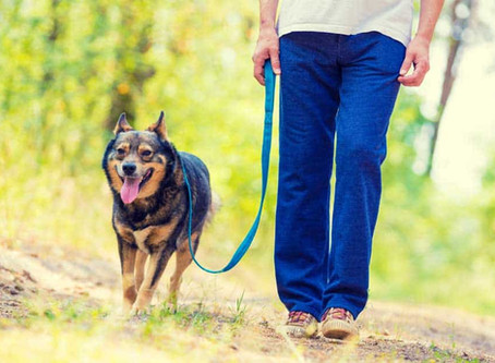 Tips For Walking Your Dog On A Leash