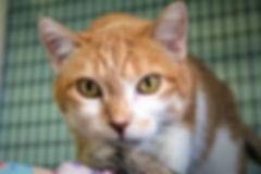 Barn Cats Image_web.jpg