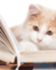 kittens_with_books.0.0-1024x683.jpg