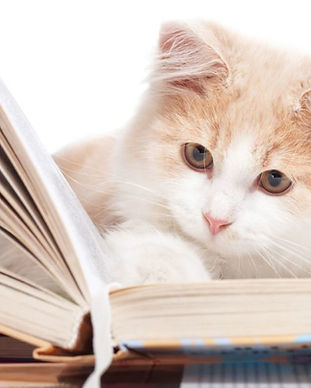 kittens_with_books.0.0-1024x683.jpg
