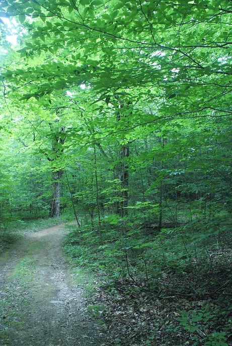 Road Down to Lower Lower Field 1.JPG