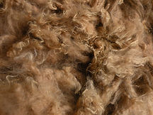 This is what raw alpaca fiber looks like when freshly shorn off an alpaca.