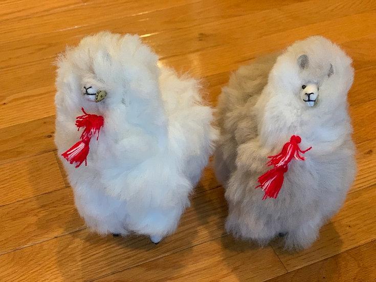 Fluffy Alpacas