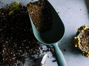 5 Ways to Prep Your Garden for Winter
