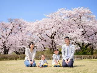 満開の桜に囲まれて